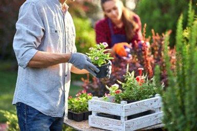 Neue Blumen werden im Garten von einem Paar eingepflanzt