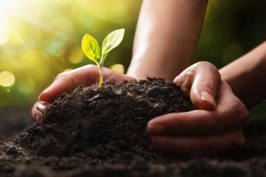 Eine Pflanze wird im Garten in den Mutterboden eingepflanzt