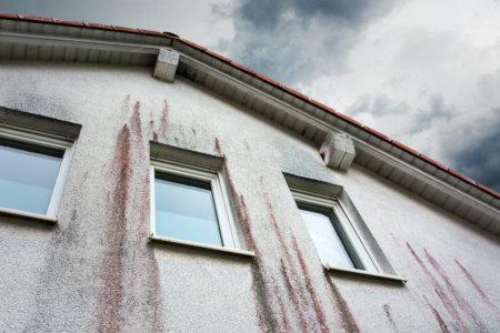 Algen Bakterien und Pilze an der Fassade