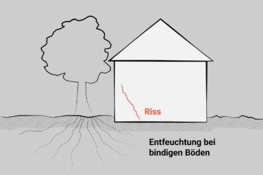 Skizze: Ein Baum direkt neben dem Gebäude lässt den bindigen Boden austrocknen. Ein Riss in der Wand ist die Folge.